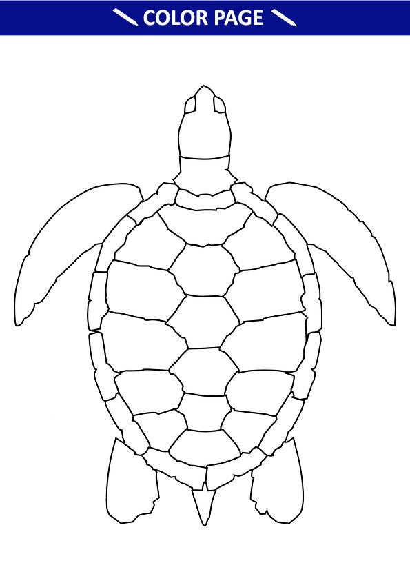 Free Printable Turtle Coloring Pages For Kids Online GETATOZ