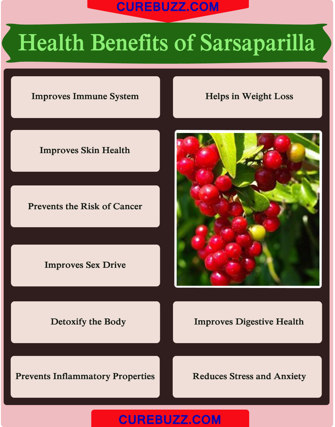 Health Benefits of Sarsaparilla