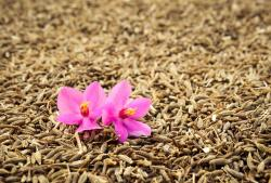 9 Health Benefits of Cumin