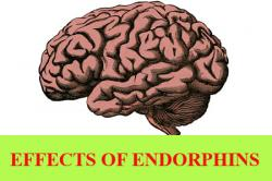 Effects of Endorphins and how to increase levels