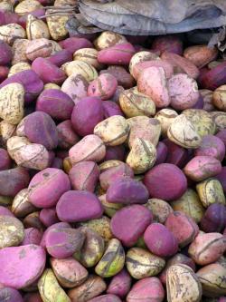 9 Health Benefits of Kola Nut