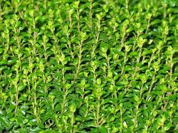 8 Health Benefits of Thyme