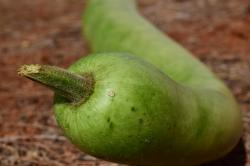 9 Health Benefits of Snake Gourd