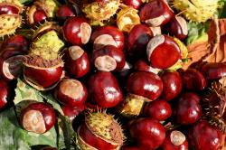11 Health Benefits of Chestnuts