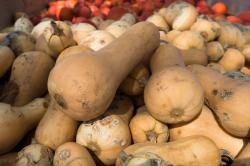 8 Health Benefits of Bottle gourd