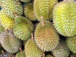 8 Health Benefits of Durian Fruit