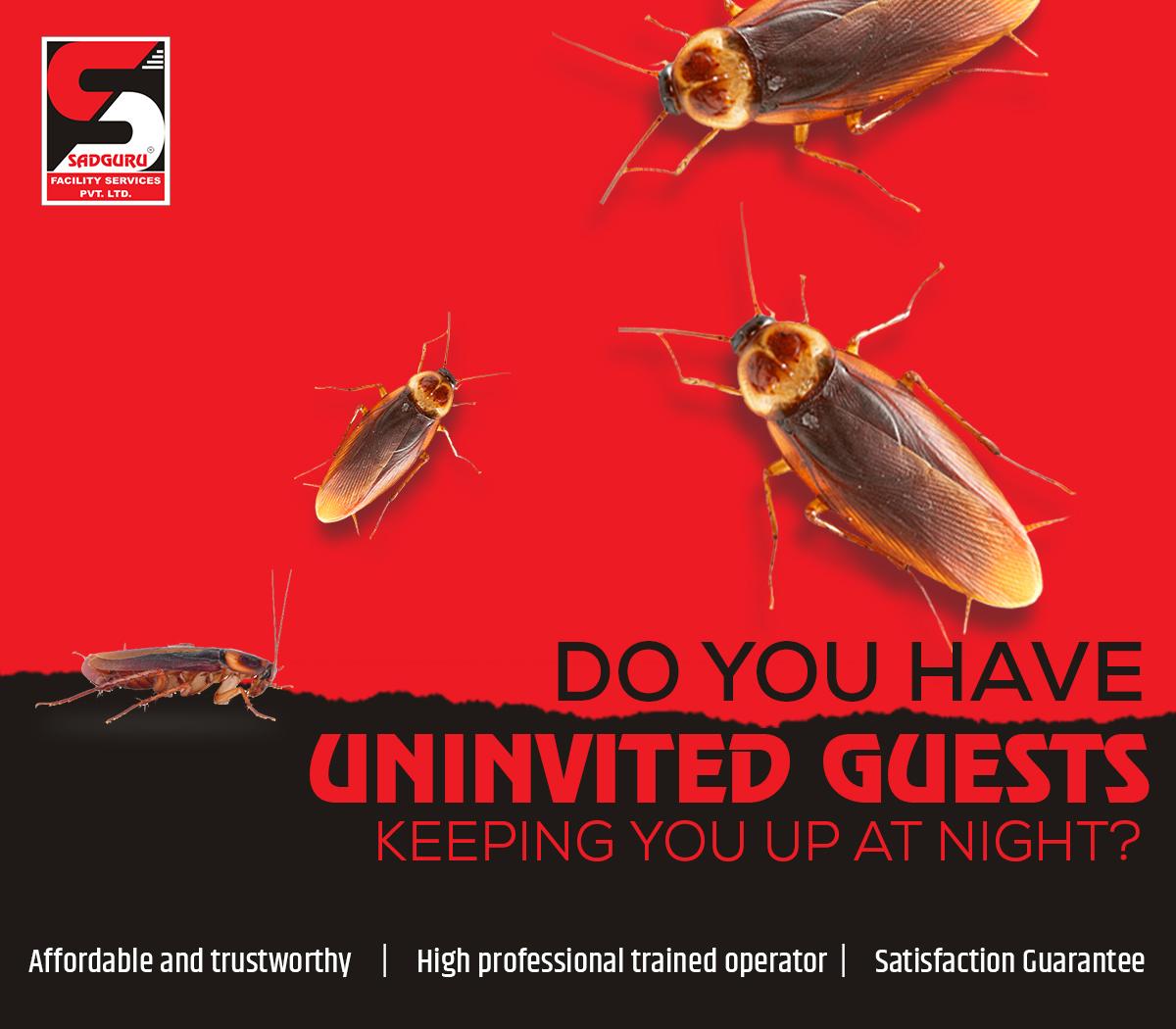 Cockroach Control Services in  Borivali – Sadguru Pest Control